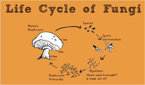 Diagrams of Fungi http://www.meldrenachapin.com/blog/wordpress/2011/08/25/eco-packaging-in-the-interior-design-industry/